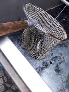 Fisch beim herausholen